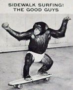 サーフィントレーニング等に最適なスケートボード